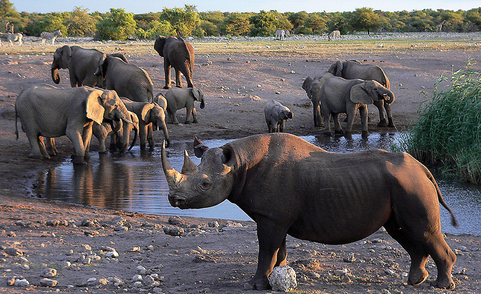 Join us in Namibia - Safari Packages